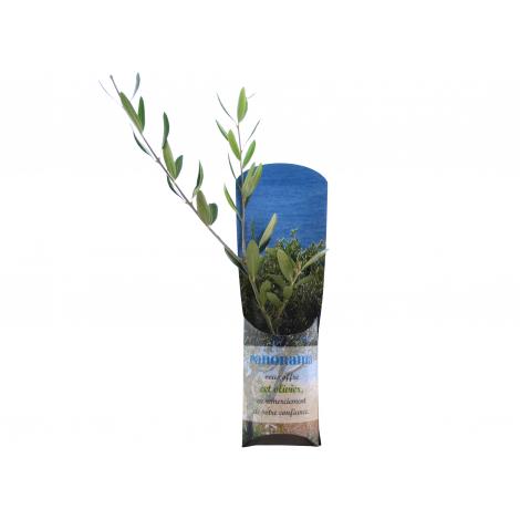 Plant d'arbre dans un étui carton publicitaire