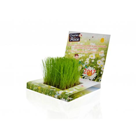 Carte de jardin à faire pousser