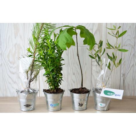 Plant arbre en pot zinc