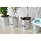 Plant d'arbre dans un pot en zinc publicitaire