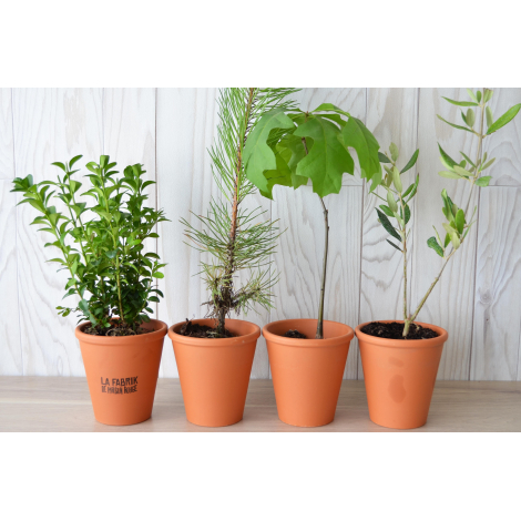 Plant d'arbre en pot terre cuite publicitaire