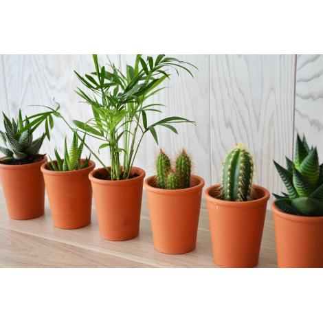 Mini plante dépolluante - pot en terre cuite