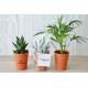 Plante dépolluante publicitaire pot en terre cuite