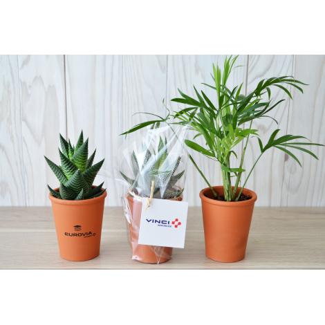Mini plante dépolluante - pot en terre cuite publicitaire