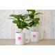 Caféier en mug