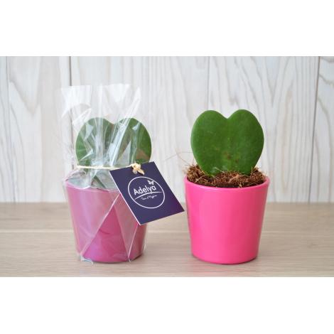 Hoya - Pot zinc 7 cm