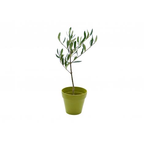 Plant arbre en pot fibre de bambou