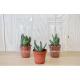 Mini serre publicitaire pot cactus