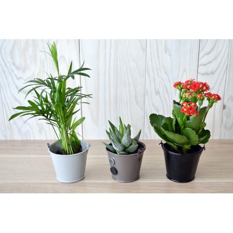 plante dépolluante en pot zinc aimanté