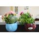 Plante dépolluante en pot céramique aimanté et publicitaire