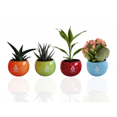 Plante dépolluante en pot céramique aimanté
