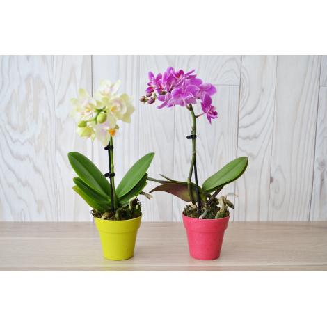 Orchidée - pot fibre bambou