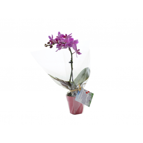 Orchidée pot en fibre de bambou