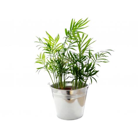 Grande plante déco