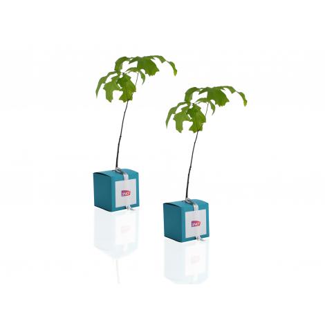Le cube arbre