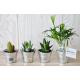Mini plante dépolluante - pot zinc
