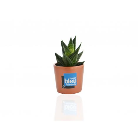 Mini plante dépolluante en pot céramique publicitaire