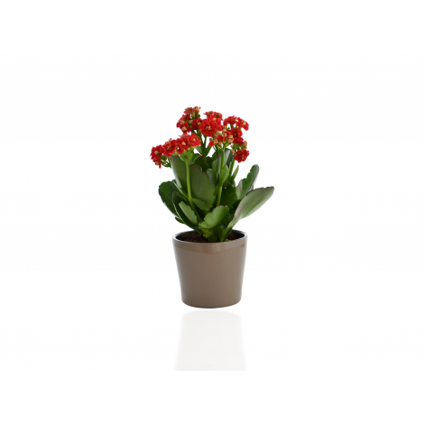 mini plante dépolluante en pot céramique