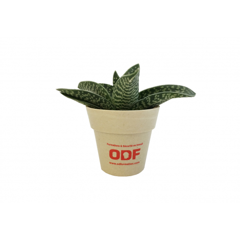 Plante déco en pot écolo et publicitaire