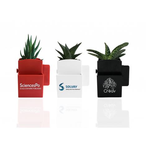 La Végétal-Box avec plante dépolluante