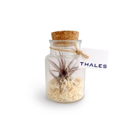 Terrarium en bouteille publicitaire - Tillandsia