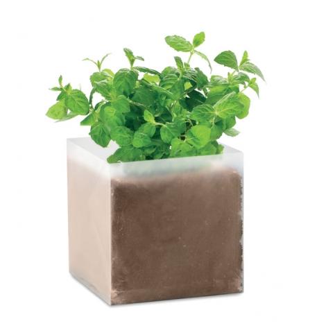 Kit plantation personnalisable dans sachet