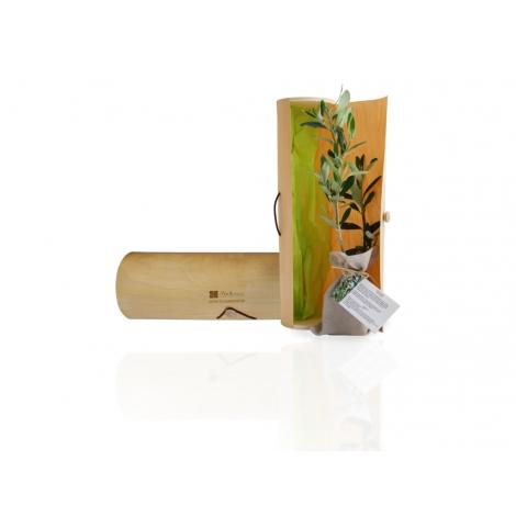 Plant d'arbre dans un tube bois publicitaire