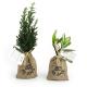 Mini plant d'arbre dans un pochon publicitaire