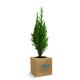 Cube bois publicitaire avec un arbre