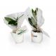 Oeuf promotionnel avec mini plant d'arbre