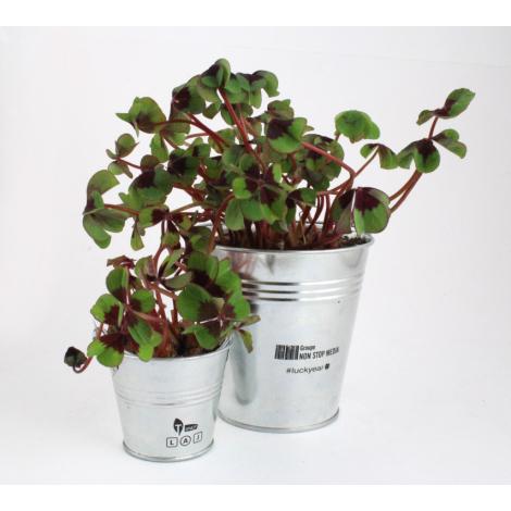 Trèfle à 4 feuilles poussé dans un pot publicitaire