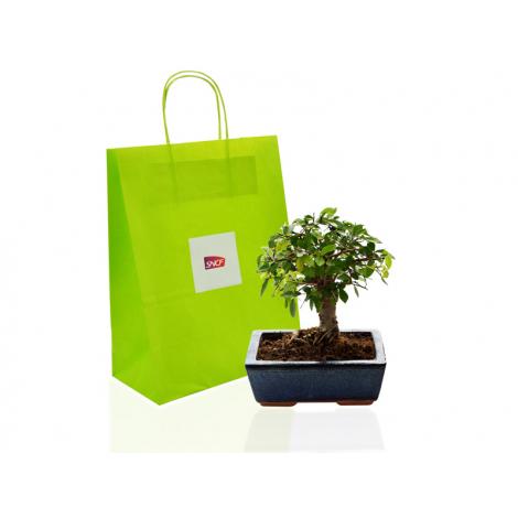 Bonsaï Ulmus ou Ficus dans un sac kraft publicitaire