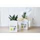 La Végétal-Box publicitaire avec plante dépolluante