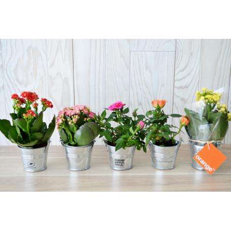 Mini plante fleurie - Pot zinc publicitaire