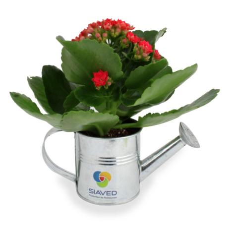 Arrosoir publicitaire en zinc avec mini plante fleurie
