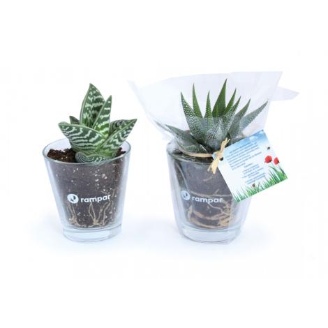 Mini plante dépolluante en vase publicitaire