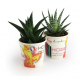 Plante dépolluante en pot carton personnalisable