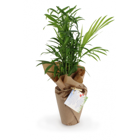 Plante personnalisée zéro déchet